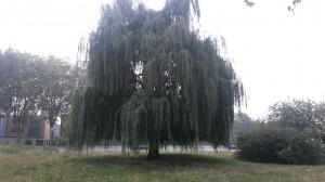 WILLOW20140918_085503